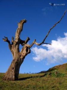 Sunlit Tree Near Sona