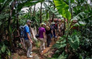 Trekking na Kilimandżaro - las deszczowy