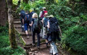 Szlak w lesie deszczowym podczas trekkingu na Kilimandżaro