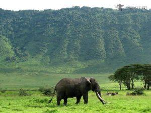 Na dnie krateru Ngorongoro