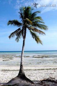 plaża Zanzibaru