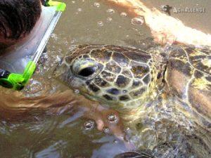 wyspa żółwi - Zanzibar - wyprawa na Kilimandżaro