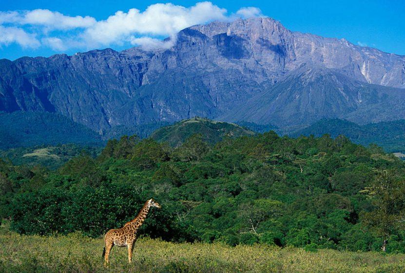 Mount Meru 4567 m - wielka góra w cieniu Kilimandżaro - zdjęcie z blog podróżniczy 4challenge
